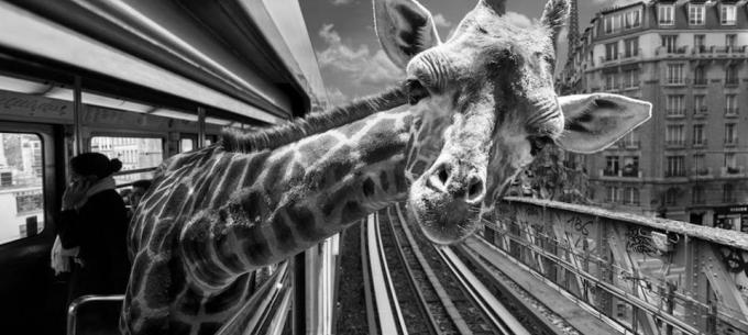 Közösségi közlekedés a világban: Állatok vették birtokba a párizsi metróállomást